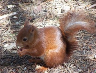 Blog about Squirrels In The Attic Are No Joke - How To Evict Them