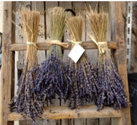Dried lavender flowers which may eventually be made into essential oils - Amazon.com - All Rights Reserved