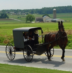Amish Cart & Buggy