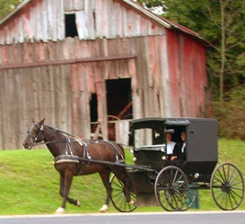 Amish Horse & Carriage