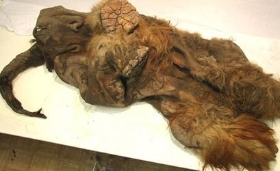 Hair Covered Mammoth