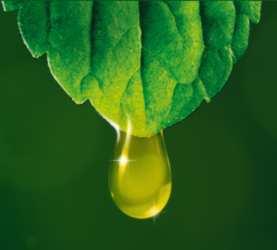 Rene Furterer Oils
