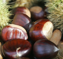 Hazelnuts - Nuts For Your Hair: Eating Nuts For Hair Health