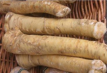horseradish - Wikipedia