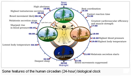 Sleep Circadian Cycle - Wikipedia