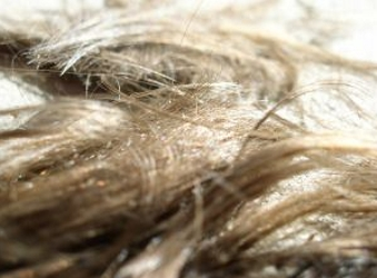 Hair Clippings - HairBoutique.com